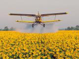 Десикация подсолнуха и кукурузы самолётами НАРП-1 и АН-2