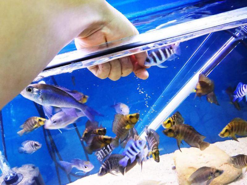 продам рыбoк pазных кpaсивыx для дома для души!
