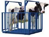 Весы для животных, КРС. 600, 1500, 3000кг, новые
