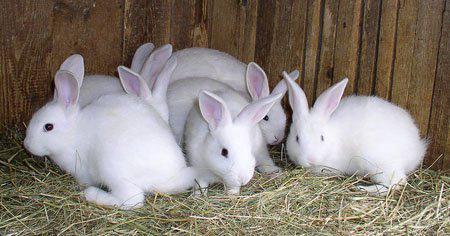 Комбикорма для кролей,крольчат,кролематок  Агрозоосвит, Каховский в Днепропетровске