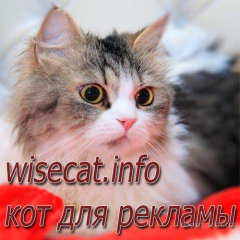Кот для рекламы