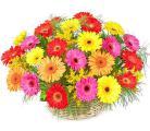 Цветы в шляпных коробках! Доставка! Розы, пионы, тюльпаны и др.
