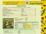 Семена подсолнечника от производителя, гибрид Анастасия