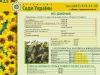 Продам семена подсолнечника от производителя, гибрид НС Дионис