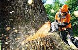 Спиливание и удаление деревьев и ветвей .