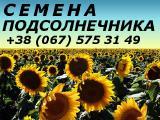 Семена подсолнечника Драган, Хортица Титаник, Гена, Константин