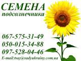 Семена подсолнечника от производителя. / АФ Сады Украины /