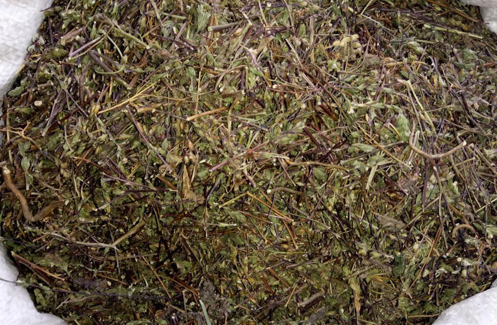 Очанка коротковолосая,трава.