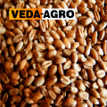 Купуємо пшеницю (2,3 класу)