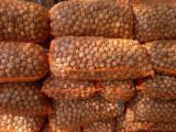 Орех грецкий (кругляк)