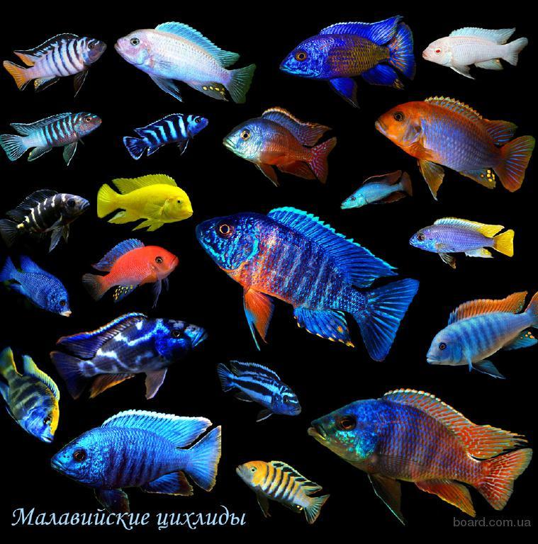 Продаю аквариумные рыбки по низкой цене !
