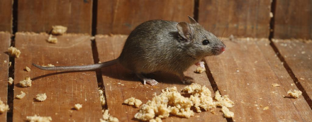 Избавим от мышей и крыс Днепропетровск