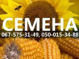 Продам семена. Семена подсолнечника. Посевной материал. Высококачественные семена