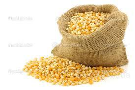 Куплю кукурудзу на экспорт
