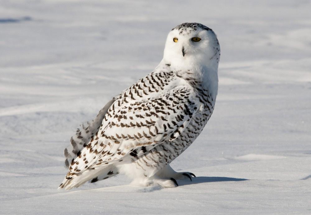 Большая энциклопедия орнитолога
