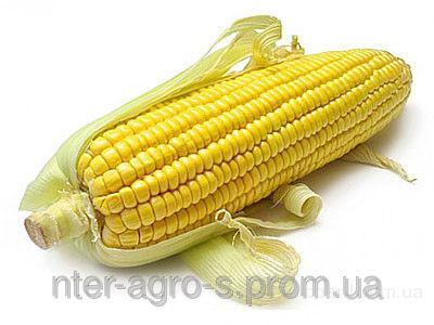 Насіння кукурудзи PR39T13