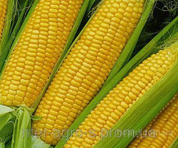 Насіння кукурудзи PR38N86