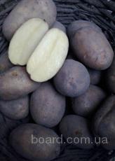 Картофель оптом от фермерского хозяйства