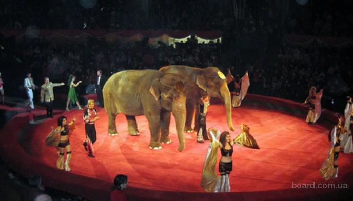 Гастроли европейского цирка