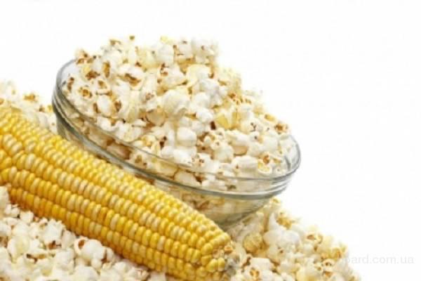 Продам семена кукурузы «Поп-корн».