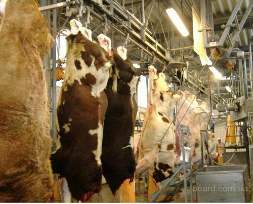 оборудование для убоя скота