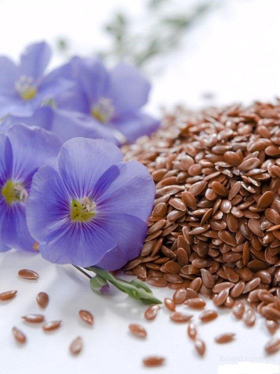 Лён семена, семена льна, посевной материал лён.