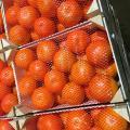 продам фрукты
