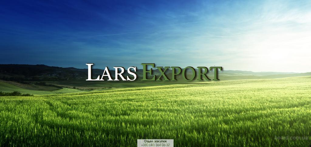 Компания Lars Export купит зерновые (пшеницу, кукурузу, ячмень)