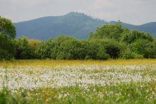 закарпатье на майские праздники из киева, долина нарциссов, берегово, ужгород, мукачево, львов, экскурсии отдых