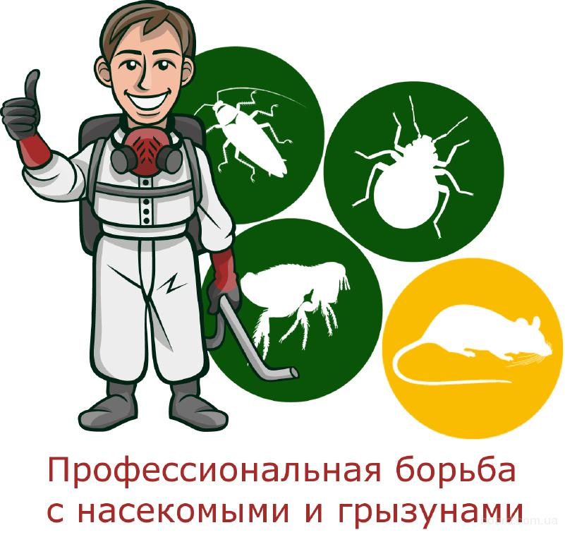 Обработка помещений от насекомых, грызунов, плесени