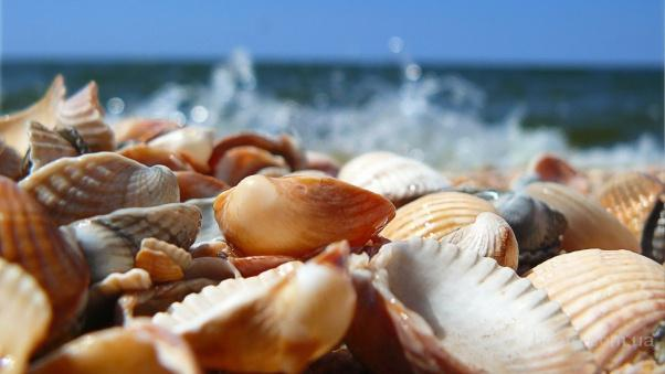Продаем кормовую ракушку дробленную морскую и речную