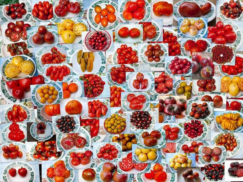 Семена помидор томатов и перец острый около 100 сортов