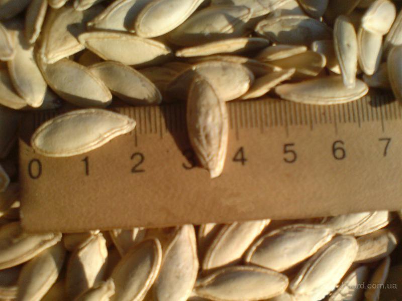 Посевной материал тыквы сортов Сероволжская и Болгарка 1 Репродукции