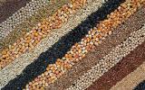 Закупаем пшеницу, ячмень, гречиху, горох, кукурузу, подсолнечник