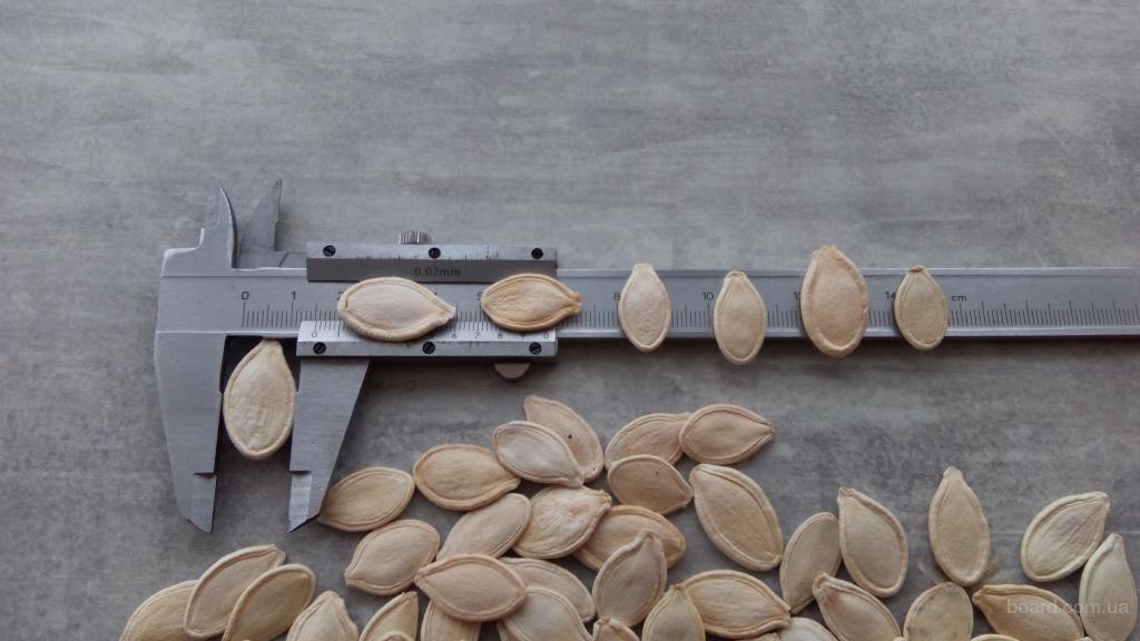"""Реализуем семена тыквы сорт """"Украинская многоплодная"""" калибр 11+, очищена на фотосепараторе"""