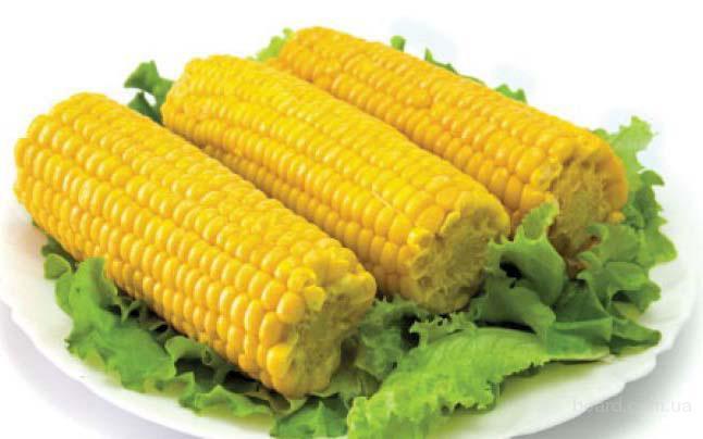 Принимаем заявки на Сахарную кукурузу на 2016 год