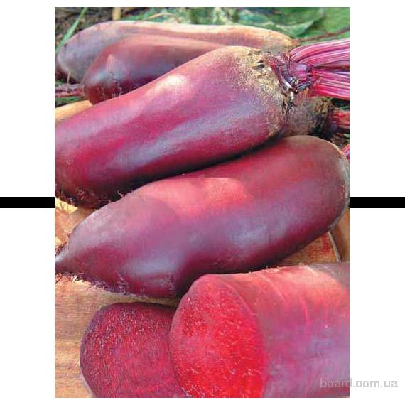 Продам семена Свекла столовая Регульский Цилиндр