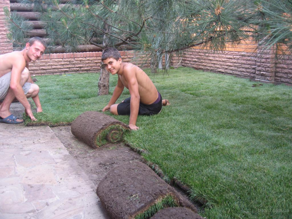 Газон, рулонный газон, укладка, системы автоматического полива