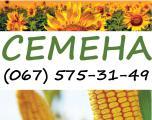 Семена кукурузы и подсолнечника сербской селекции NS Seme (Нови-Сад, Сербия)