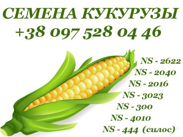 Продам семена кукурузы (сербская селекци