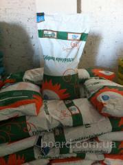 Семена кукурузы NS-2622, сербская селекция, NS Seme, г.Нови-Сад  (продам)