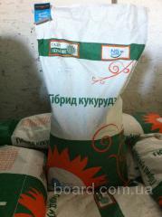 Семена кукурузы NS-205, сербская селекция, NS Seme, г.Нови-Сад  (продам)
