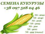 Семена кукурузы, сербская селекция, NS Seme, г.Нови-Сад (продам)