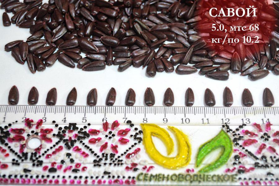 Купить семена подсолнечника Ясон по выгодной цене в Украине.