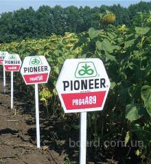 Семена подсолнечника PR64A89