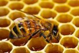 Мед замість цукерків