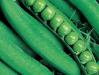 Продам насіння гороху Дінга тм. (Kouel)