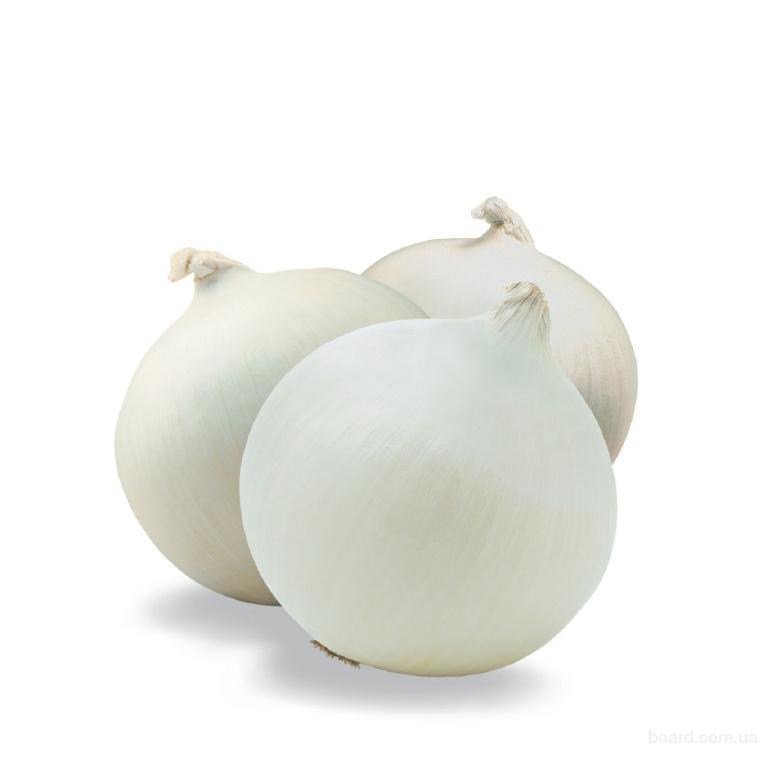Продам Цибулю ріпчасту білу, лук репчатый, голландія,