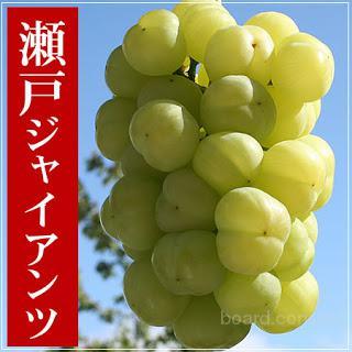 """Саженцы винограда """"Сето Гигант"""" (Япония)"""