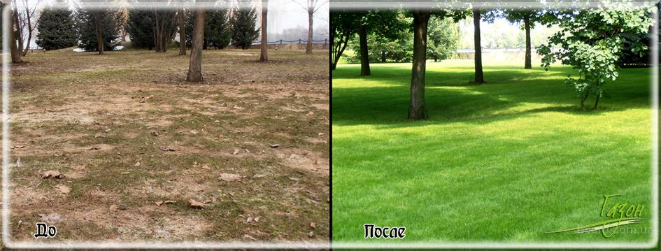 Восстановление газона, реставрация газона